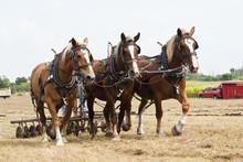 Horse-drawn Farming Demonstrations