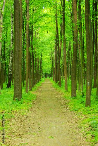 Spoed Foto op Canvas Weg in bos nature