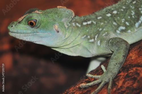 Cadres-photo bureau Cameleon Reptil