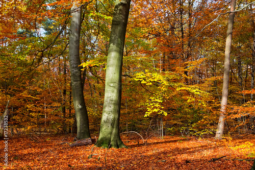 Deurstickers Herfst Vibrant image of autumn forest at sunset