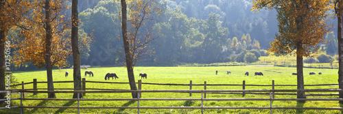 Foto op Canvas Paarden horses