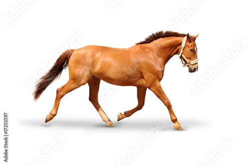 Pferd 52