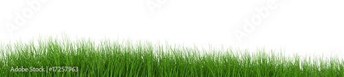 Deurstickers Gras fresh grass row