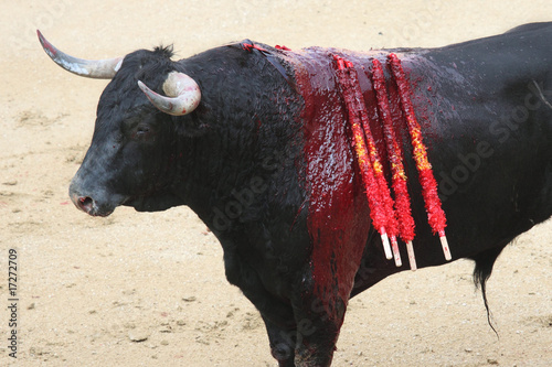 La pose en embrasure Corrida bullfight