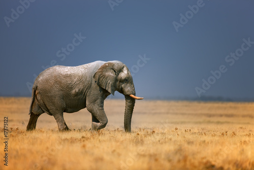 Tuinposter Olifant Elephant in frassfield
