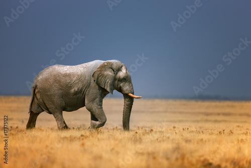 Deurstickers Olifant Elephant in frassfield