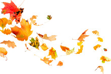 Falling And Spinning Autumn Leaves