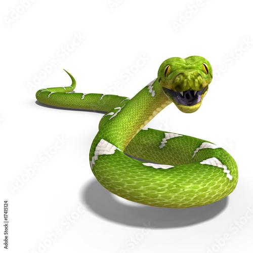 Fényképezés  green tree python