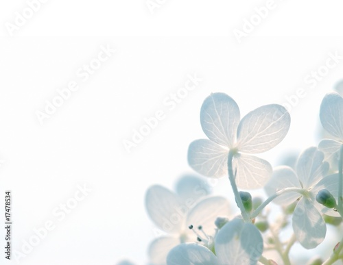 Stickers pour porte Hortensia Abstract Hydrangea Flowers