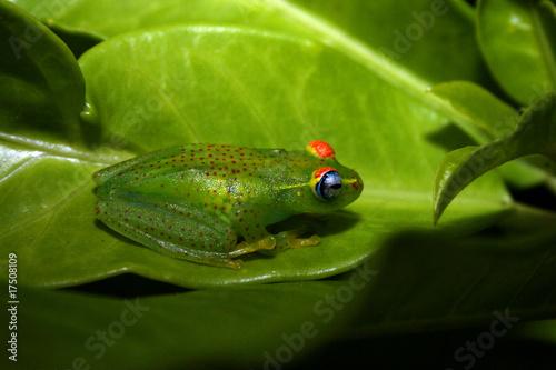 Foto auf Gartenposter Frosch Frosch Ranomafana