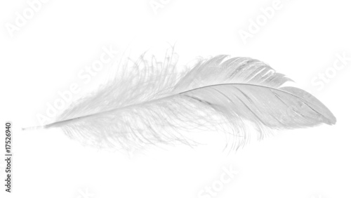 isolated white small feather