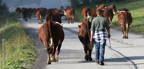 Photo sur Aluminium Vache attention vaches