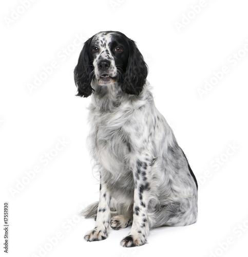 Black and white bastard dog sitting against white background Canvas Print
