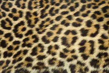 Fototapetaleopard fur texture (real)