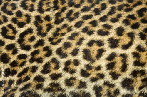 Canvas Prints Leopard leopard fur texture (real)