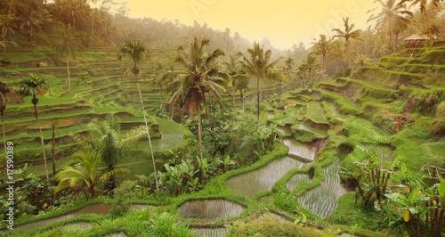 Garden Poster Rice fields Reisterasse am Abend