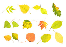 Autumn Collection Leaves