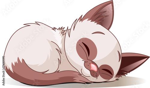 Poster Magie Sleeping kitten