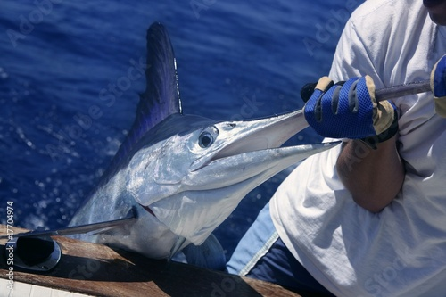 Photo Billfish white Marlin catch and release on boat