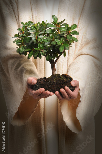 Jesus Hands Holding Tree