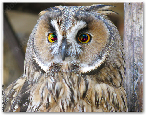 Keuken foto achterwand Uil Close up of wise owl with rainbow eyes