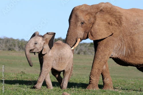 Foto op Aluminium Olifant Elephant and Baby