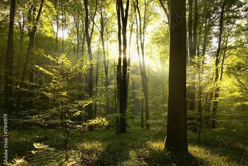 Fototapeten Wald Ray of sunshine