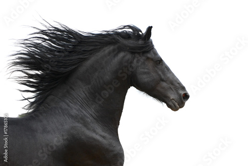 Fotobehang Paarden Portrait of galloping frisian horse on white background