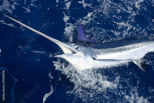 Photo  Beautiful white marlin real billfish sport fishing