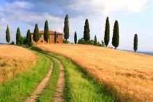 Weg,  Zypressen, Haus, Wolkenhimmel, Toskana, Italien