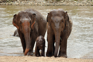 FototapetaTo elephants with baby