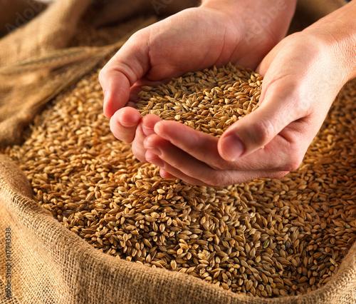 Fototapeta Grain obraz