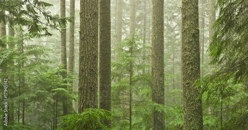 Door stickers Olive OLd growth forest