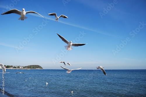 Photo beachside