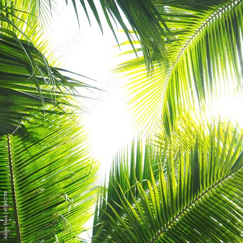 Fototapeta liście   dzungla-z-palami