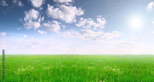 Montage in der Fensternische Gras Summer landscape
