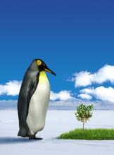 Penguin Wondering Grass