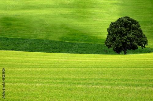 Spoed Foto op Canvas Pistache Baum im Feld