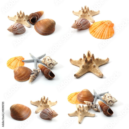 Foto Rollo Basic - seashells collection