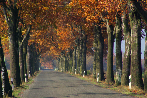 Fototapety, obrazy: Allee im Herbst - avenue in fall 10