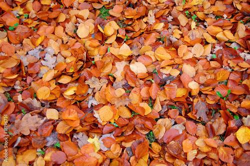 Herbstlaub @p(AS)ob