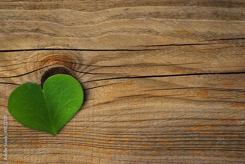 Fotografía  une feuille de trèfle vert symbole de l'environnement - green