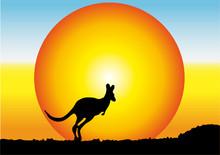 Australia,canguro