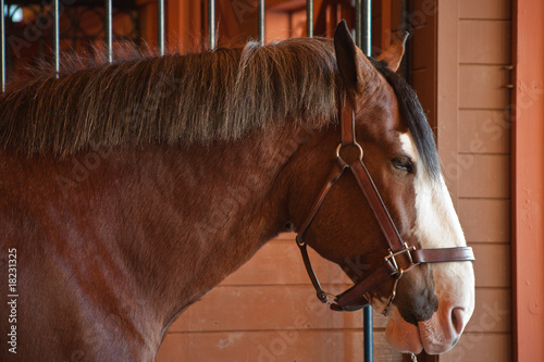 Clydesdale Canvas-taulu