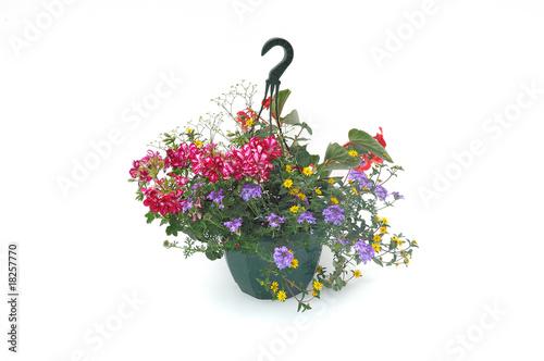 suspension florale Canvas Print