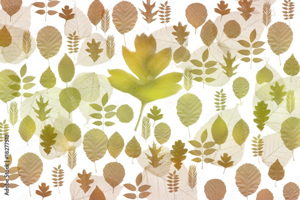 Fototapeta liście jesienne
