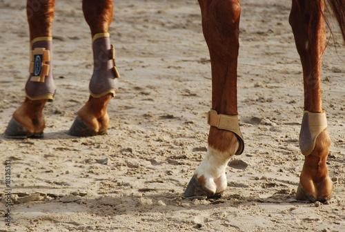 Foto Membres de cheval.