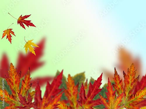 Aluminium Prints Autumn autumn background