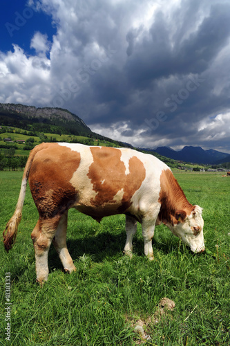 Bull in a grass field Wall mural