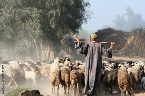 Obraz na plátně shepherd in africa